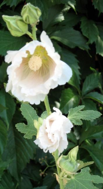SV Flowers 5