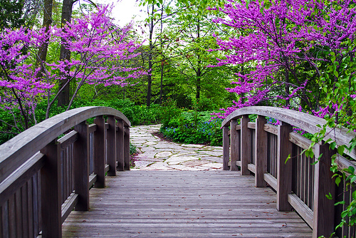The Bridge to Spring