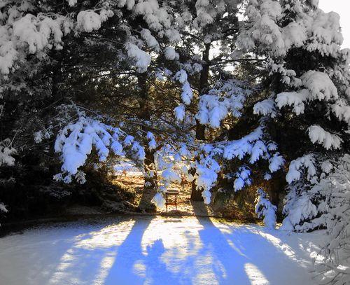 Winter Scene Front Yard