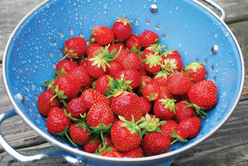 Strawberries from Mother Earth News